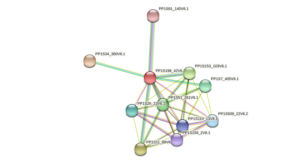 PP1S198_42V6.1 protein (Physcomitrella patens) - STRING interaction network