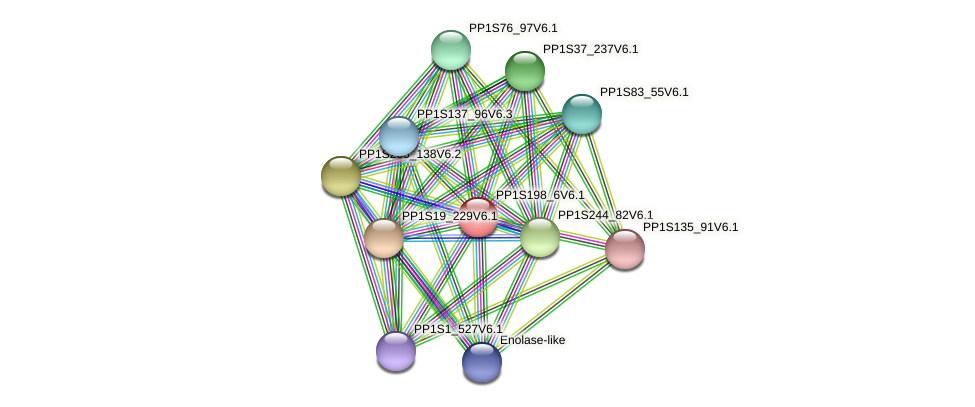 PP1S198_6V6.1 protein (Physcomitrella patens) - STRING interaction network