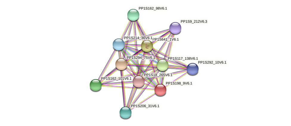PP1S198_9V6.1 protein (Physcomitrella patens) - STRING interaction network