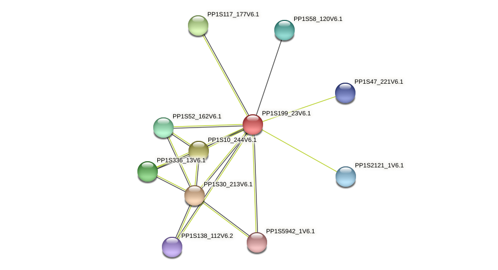 PP1S199_23V6.1 protein (Physcomitrella patens) - STRING interaction network