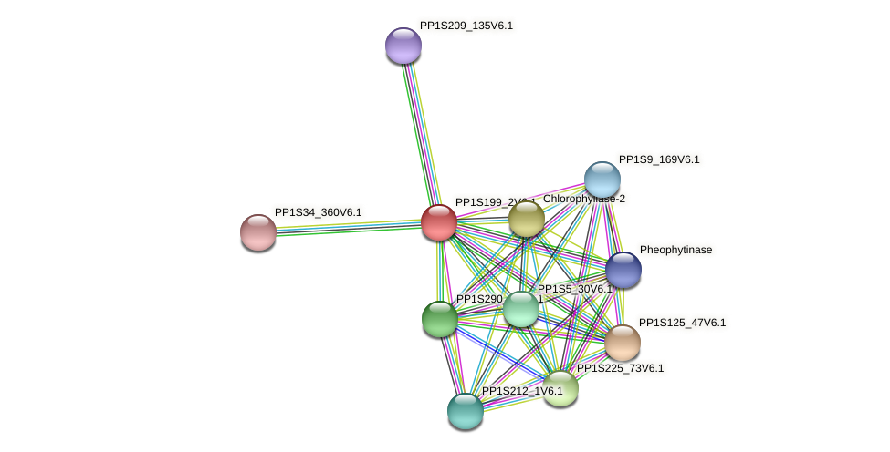 PP1S199_2V6.1 protein (Physcomitrella patens) - STRING interaction network