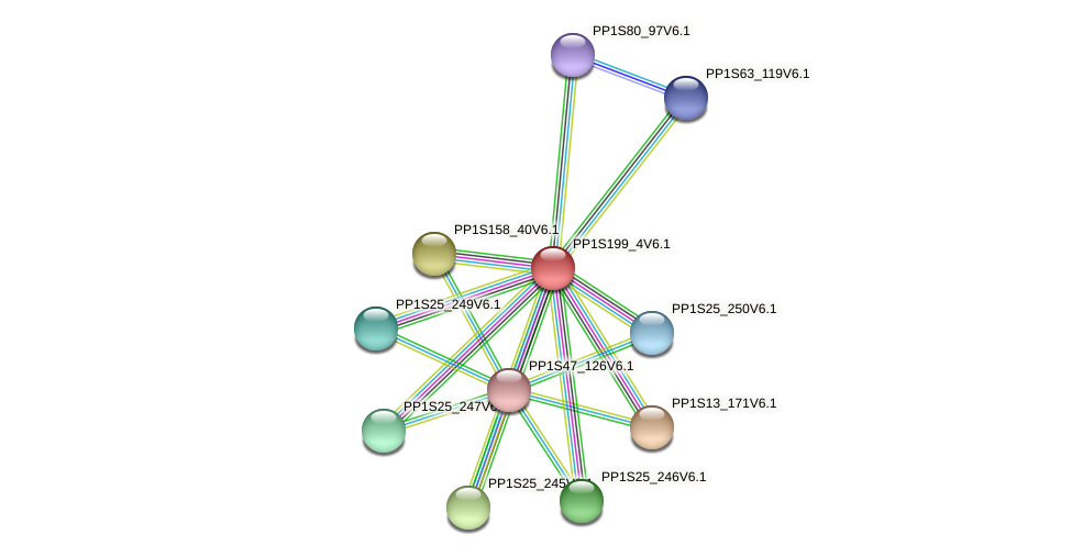 PP1S199_4V6.1 protein (Physcomitrella patens) - STRING interaction network