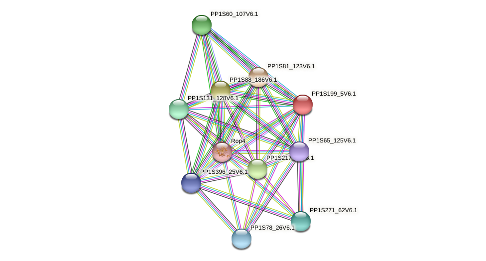 PP1S199_5V6.1 protein (Physcomitrella patens) - STRING interaction network