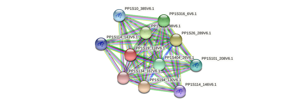 PP1S19_118V6.1 protein (Physcomitrella patens) - STRING interaction network