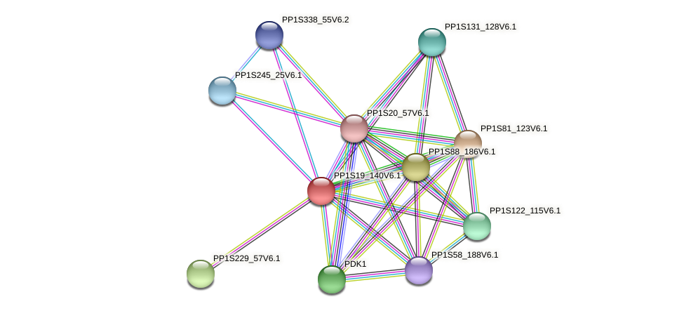 PP1S19_140V6.1 protein (Physcomitrella patens) - STRING interaction network