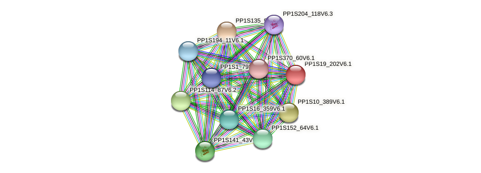 PP1S19_202V6.1 protein (Physcomitrella patens) - STRING interaction network