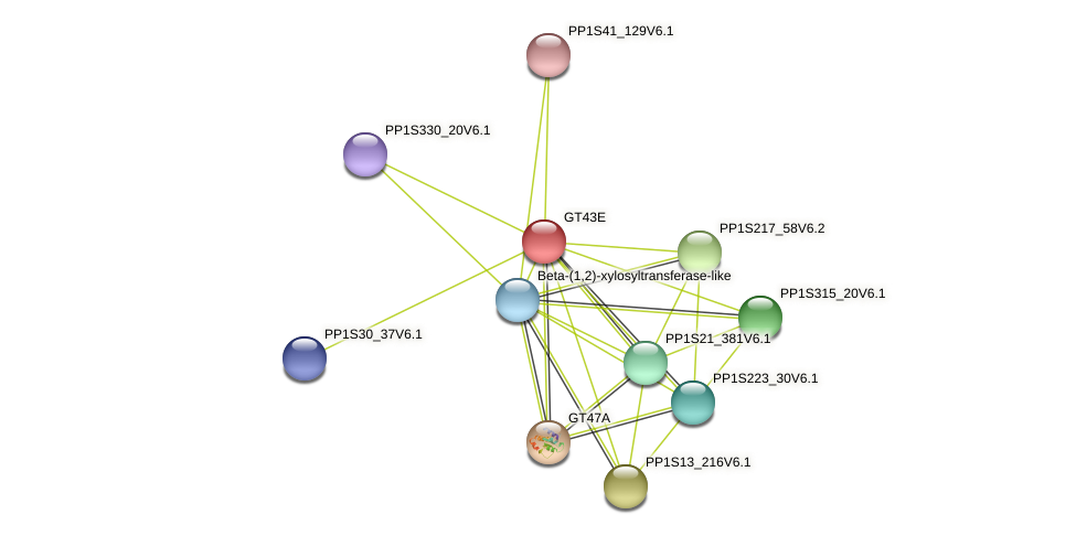 PP1S19_221V6.1 protein (Physcomitrella patens) - STRING interaction network