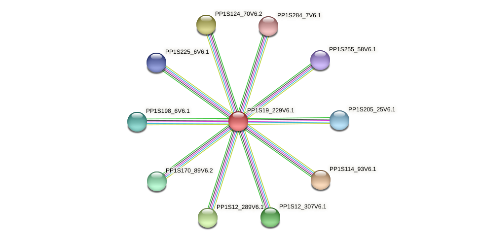 PP1S19_229V6.1 protein (Physcomitrella patens) - STRING interaction network