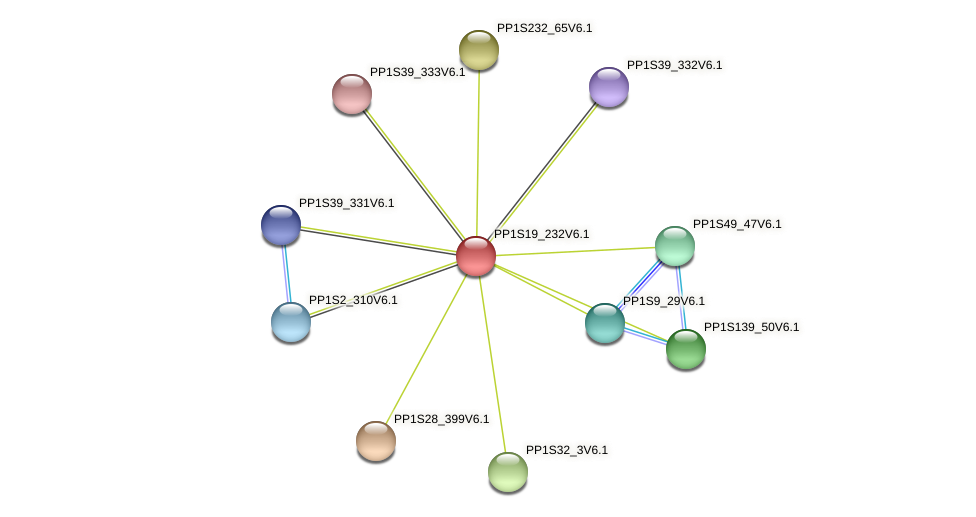 PP1S19_232V6.1 protein (Physcomitrella patens) - STRING interaction network