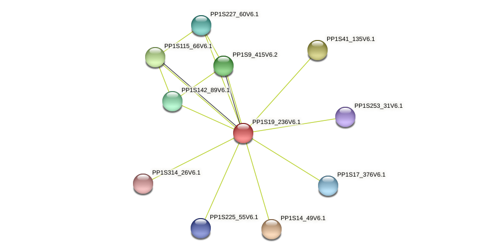 PP1S19_236V6.1 protein (Physcomitrella patens) - STRING interaction network
