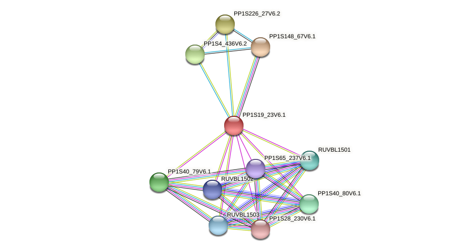 PP1S19_23V6.1 protein (Physcomitrella patens) - STRING interaction network