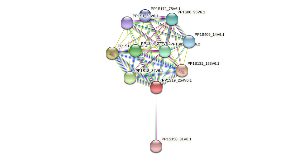 PP1S19_254V6.1 protein (Physcomitrella patens) - STRING interaction network