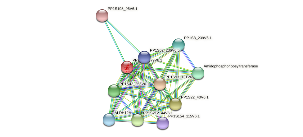 PP1S19_279V6.1 protein (Physcomitrella patens) - STRING interaction network