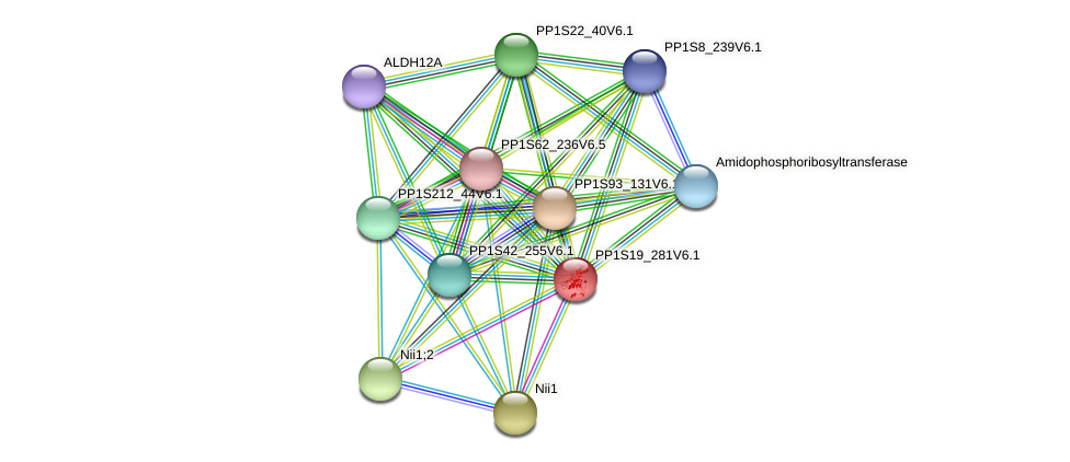 PP1S19_281V6.1 protein (Physcomitrella patens) - STRING interaction network