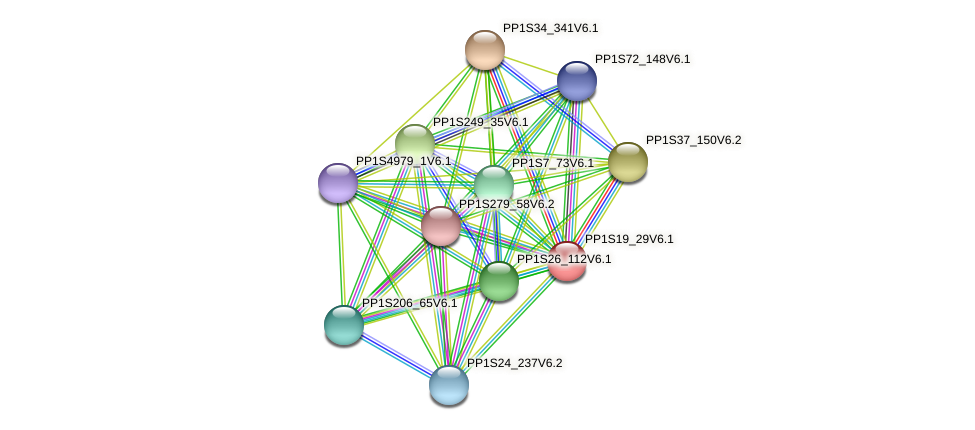 PP1S19_29V6.1 protein (Physcomitrella patens) - STRING interaction network