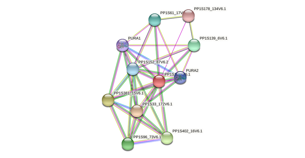 PP1S19_2V6.1 protein (Physcomitrella patens) - STRING interaction network
