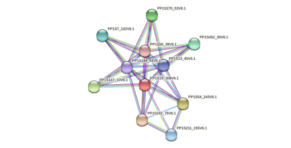 PP1S19_308V6.1 protein (Physcomitrella patens) - STRING interaction network