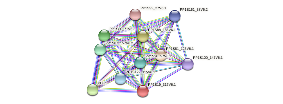 PP1S19_317V6.1 protein (Physcomitrella patens) - STRING interaction network