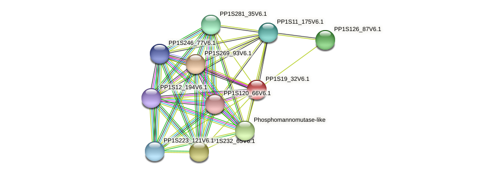 PP1S19_32V6.1 protein (Physcomitrella patens) - STRING interaction network