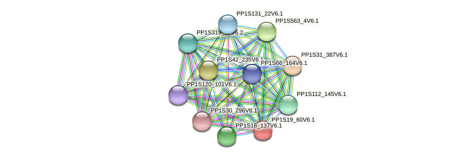 PP1S19_60V6.1 protein (Physcomitrella patens) - STRING interaction network
