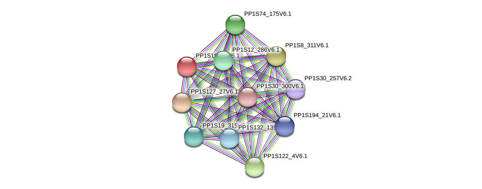 PP1S19_81V6.1 protein (Physcomitrella patens) - STRING interaction network