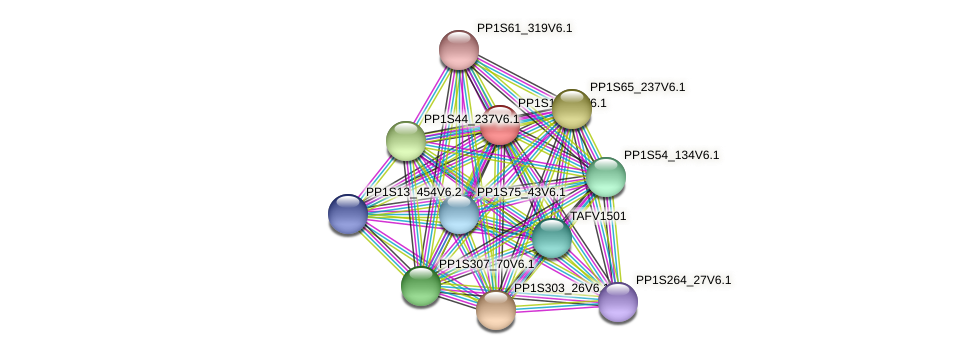 PP1S19_93V6.1 protein (Physcomitrella patens) - STRING interaction network