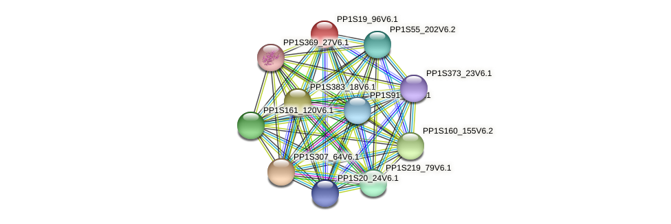 PP1S19_96V6.1 protein (Physcomitrella patens) - STRING interaction network