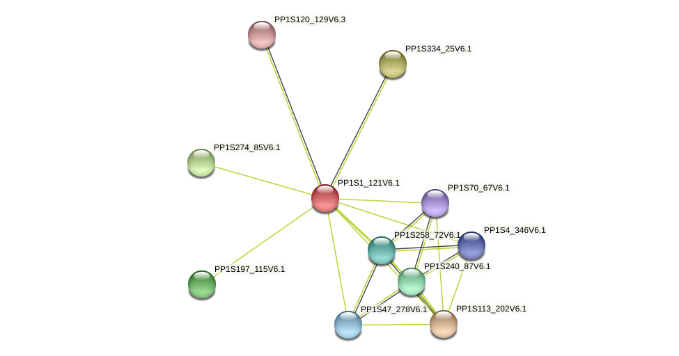 PP1S1_121V6.1 protein (Physcomitrella patens) - STRING interaction network