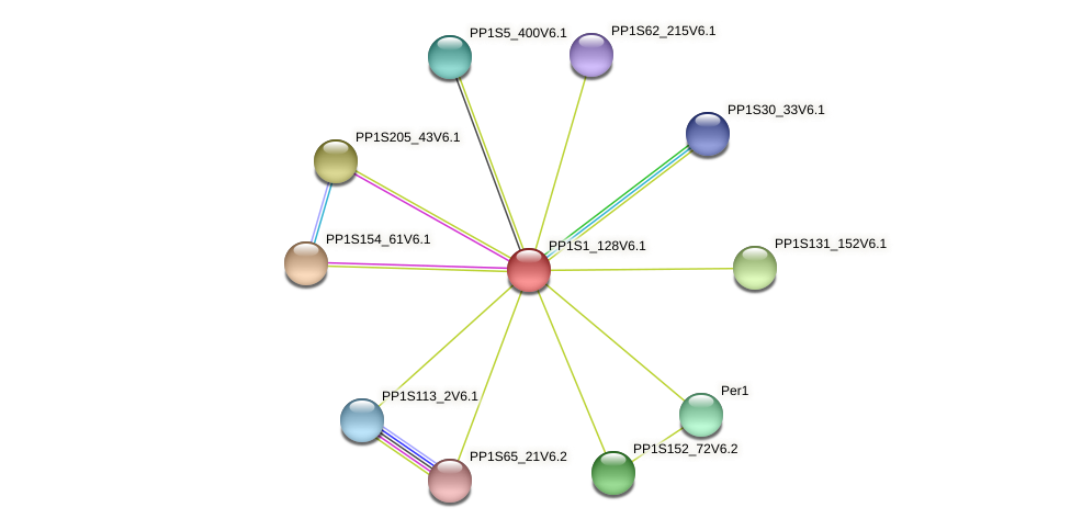 PP1S1_128V6.1 protein (Physcomitrella patens) - STRING interaction network