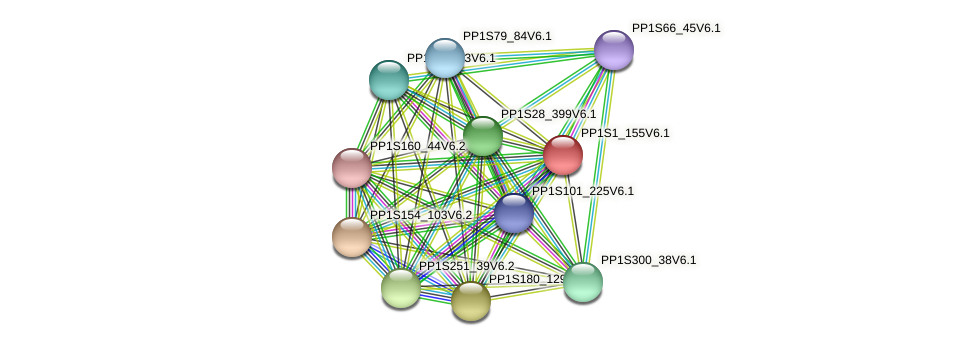 PP1S1_155V6.1 protein (Physcomitrella patens) - STRING interaction network