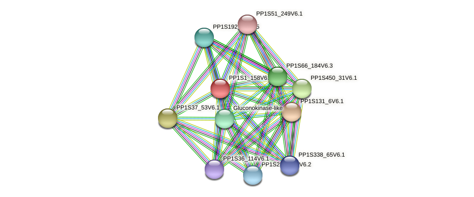 PP1S1_158V6.1 protein (Physcomitrella patens) - STRING interaction network