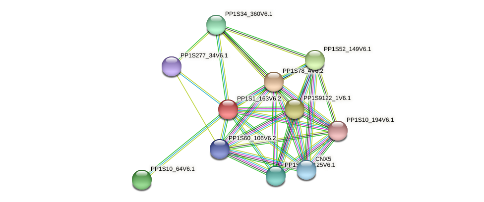 PP1S1_163V6.2 protein (Physcomitrella patens) - STRING interaction network