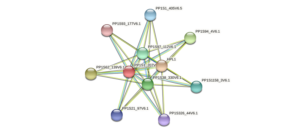 PP1S1_207V6.1 protein (Physcomitrella patens) - STRING interaction network