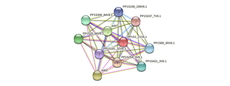 PP1S1_21V6.1 protein (Physcomitrella patens) - STRING interaction network