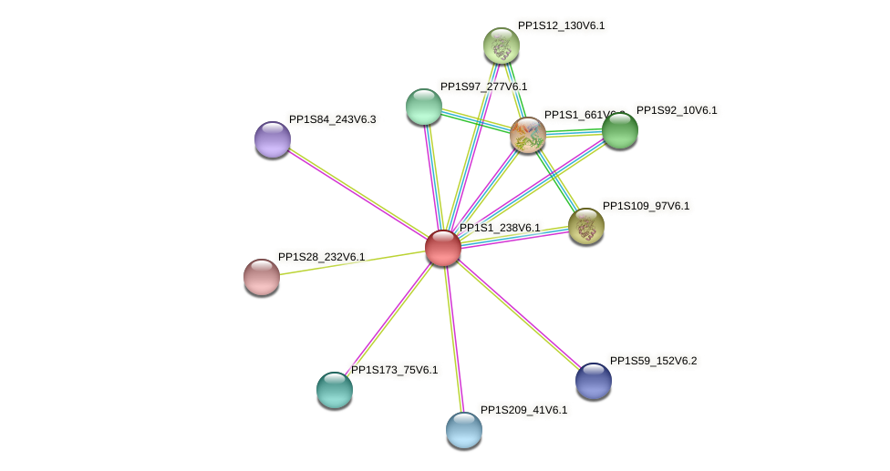 PP1S1_238V6.1 protein (Physcomitrella patens) - STRING interaction network