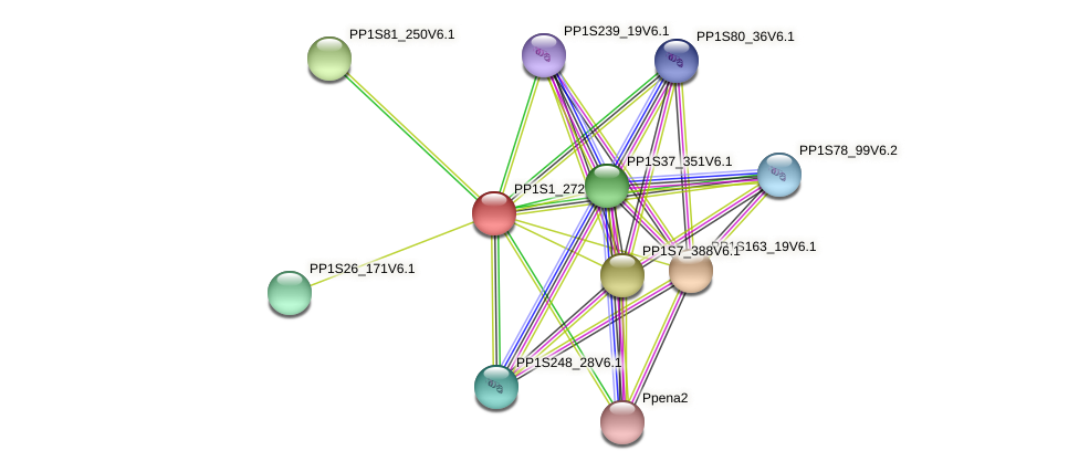 PP1S1_272V6.1 protein (Physcomitrella patens) - STRING interaction network
