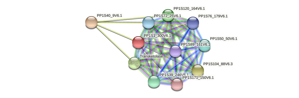PP1S1_300V6.1 protein (Physcomitrella patens) - STRING interaction network
