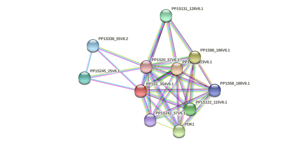 PP1S1_354V6.1 protein (Physcomitrella patens) - STRING interaction network