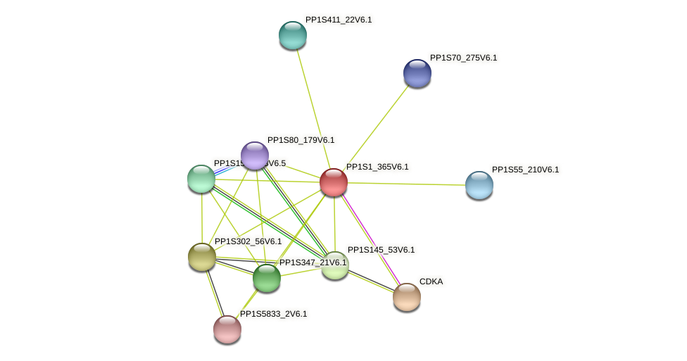 PP1S1_365V6.1 protein (Physcomitrella patens) - STRING interaction network