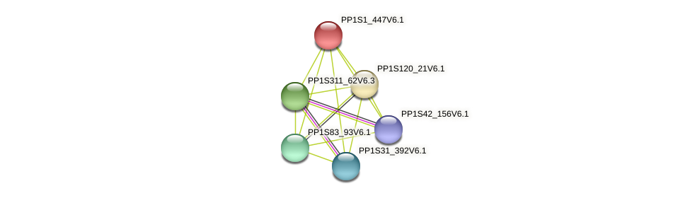 PP1S1_447V6.1 protein (Physcomitrella patens) - STRING interaction network