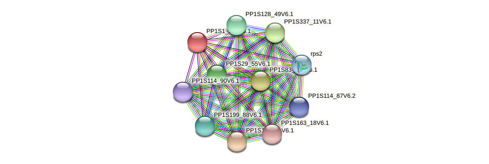 PP1S1_516V6.1 protein (Physcomitrella patens) - STRING interaction network