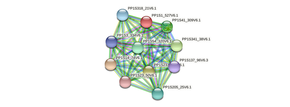 PP1S1_527V6.1 protein (Physcomitrella patens) - STRING interaction network
