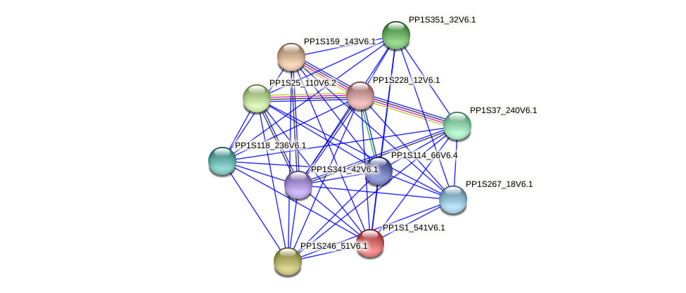 PP1S1_541V6.1 protein (Physcomitrella patens) - STRING interaction network