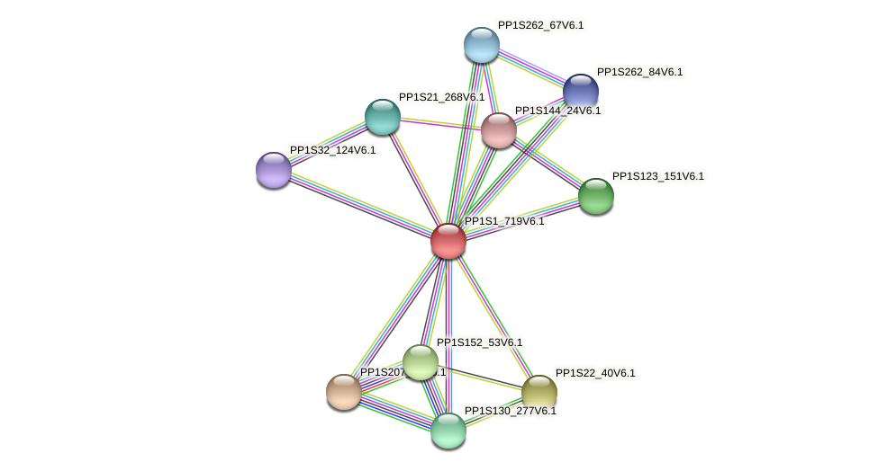 PP1S1_719V6.1 protein (Physcomitrella patens) - STRING interaction network