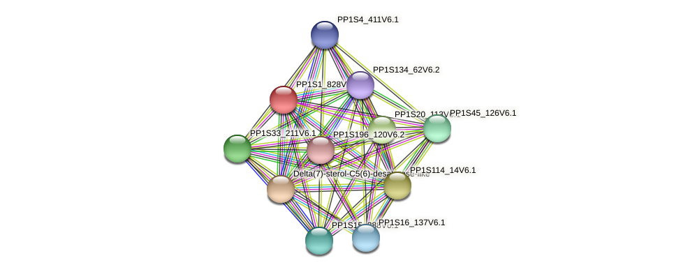 PP1S1_828V6.1 protein (Physcomitrella patens) - STRING interaction network