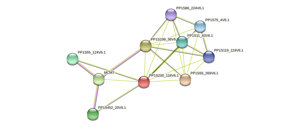 PP1S200_118V6.1 protein (Physcomitrella patens) - STRING interaction network