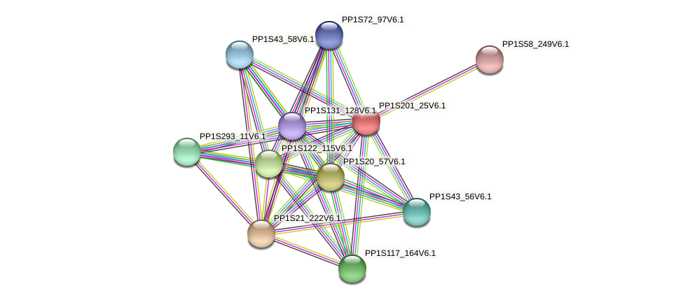 PP1S201_25V6.1 protein (Physcomitrella patens) - STRING interaction network