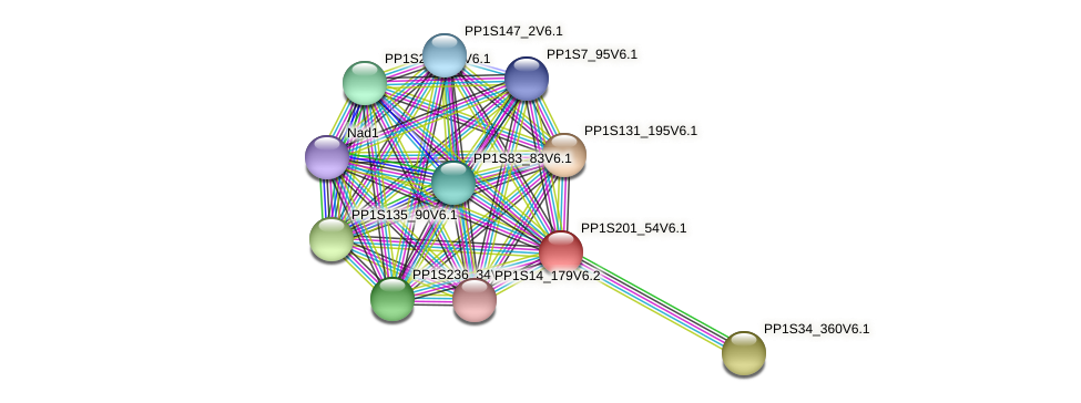 PP1S201_54V6.1 protein (Physcomitrella patens) - STRING interaction network