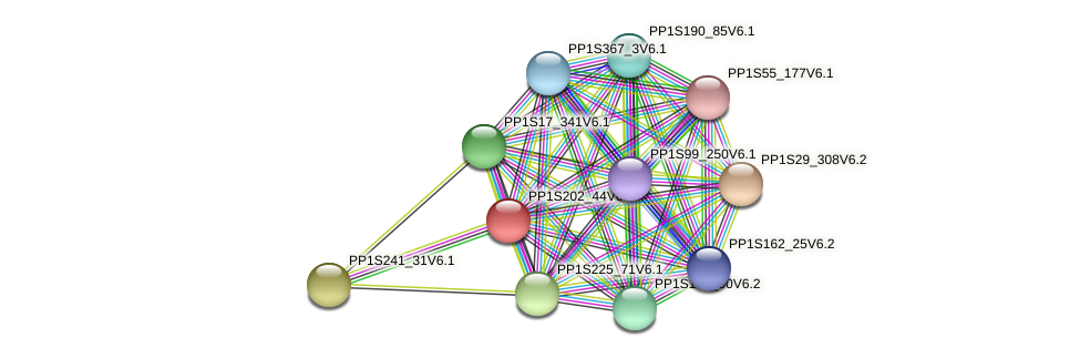 PP1S202_44V6.1 protein (Physcomitrella patens) - STRING interaction network