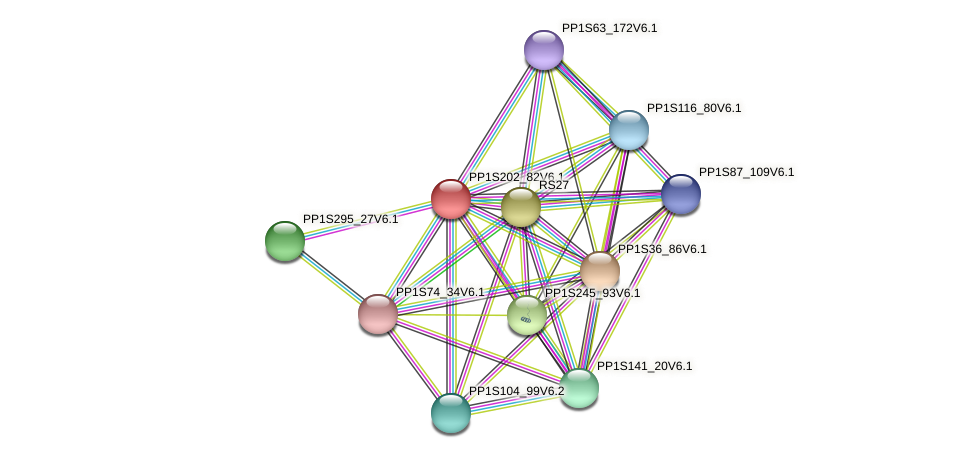 PP1S202_82V6.1 protein (Physcomitrella patens) - STRING interaction network